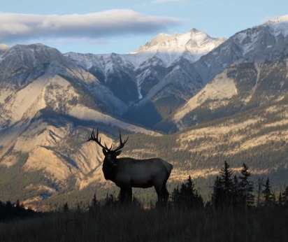 See Montana elk up close in the Rocky Mountains