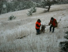 Rifle hunting in Montana